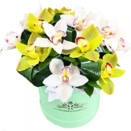 "Орхидеи в коробке ""Юппи"""