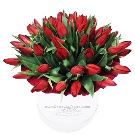 """Тюльпаны """"Страстный Поцелуй"""""""