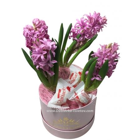 """Цветы """"Гиацинты в коробке"""""""