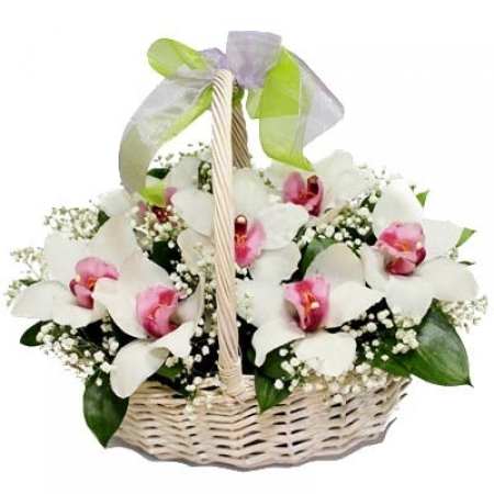 """Белые орхидеи """"Первый Звонок"""""""