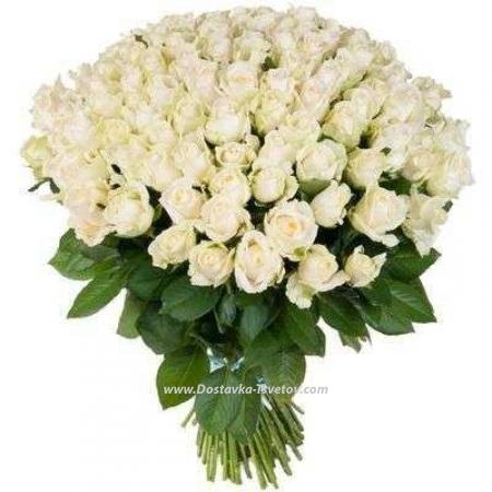 """Розы метровые """"Белые Ночи"""""""
