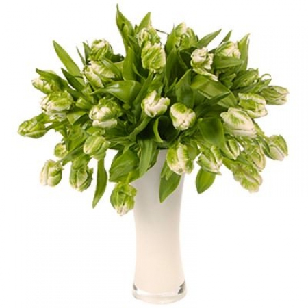 "Зелёные тюльпаны ""Ивушка"""