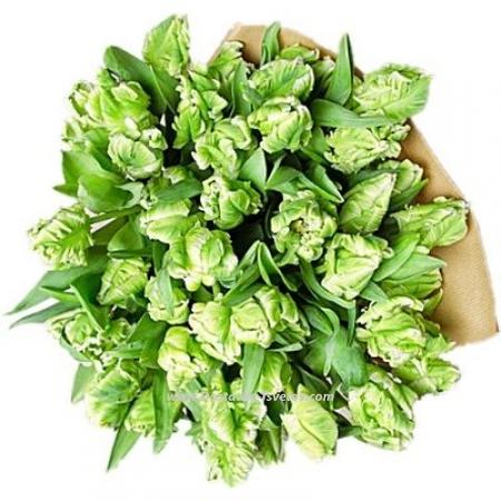 "Бело-зелёные тюльпаны ""Ёжик"""