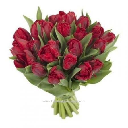 """Пионовидные тюльпаны """"Факел"""""""
