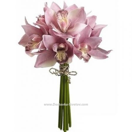 """Розовые орхидеи """"Санта Мария"""""""