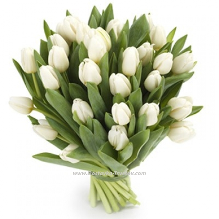 "31 тюльпан ""Белый Агат"""