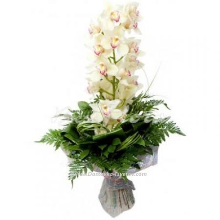 "Белая орхидея ""Атлантика"""
