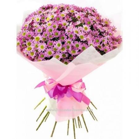 """Розовые хризантемы """"Земфира"""""""