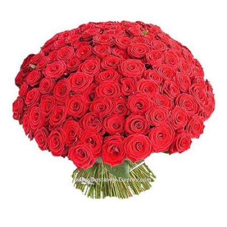 """Красные розы """"101 Поцелуй"""""""