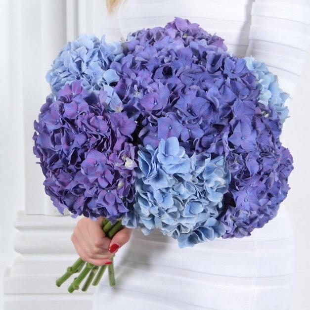 Цветов, букет гортензии днепропетровск