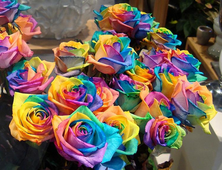 Самые красивые цветы в мире Интересные факты 42