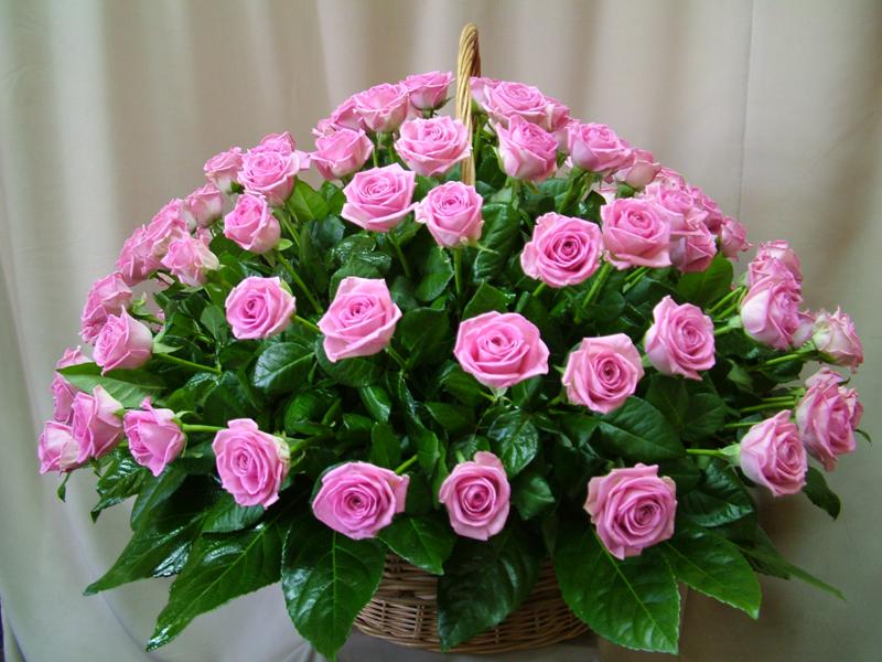 Букет перевод на немецкий, тюльпаны