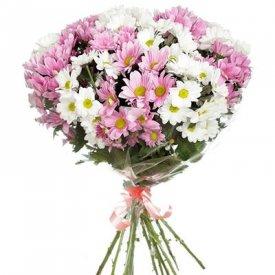 купить хризантемы в москве