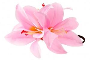 Лилии розовые значение