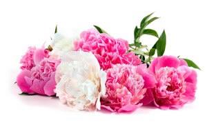 Купить цветы железнодорожный купить в шахтах вьющиеся цветы для сада