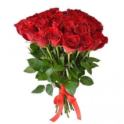 Сорты эквадорских роз